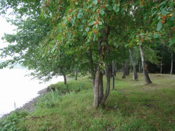 «Чистые берега» в Усть-Каменогорске